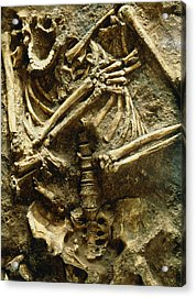 View Of The Skeleton Of A Neanderthal Acrylic Print by Volker Stegernordstar - 4 Million Years Of Man