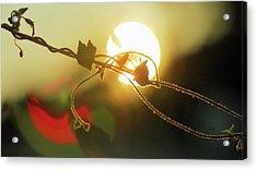 Vine Light Acrylic Print