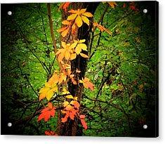Vine Acrylic Print by Michael L Kimble