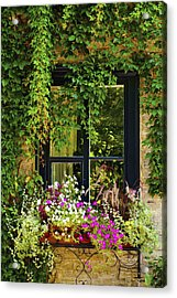 Vines Growing On A Wall And Flowers Acrylic Print by David Chapman
