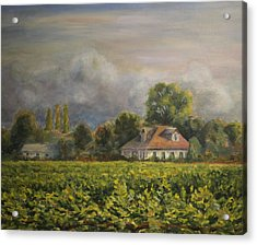 Vineyard Fog Santa Rosa Acrylic Print by Edward White