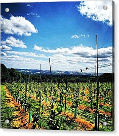 #vineyard #grapes #wine #view #scenery Acrylic Print