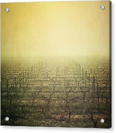 Vineyard In Mist Acrylic Print by Paul Grand Image