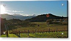 Vineyard Acrylic Print by Lori Leigh