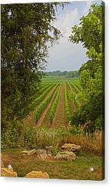Vineyard On The Bench Acrylic Print by John Stuart Webbstock