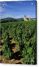 Vineyard. Regnie-durette. Beaujolais Wine Growing Area. Departement Rhone. Region Rhone-alpes. Franc Acrylic Print by Bernard Jaubert
