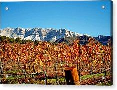 Vineyard Snow Topa Acrylic Print by Kristine Ellison