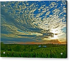 Acrylic Print featuring the photograph Vineyard Sunset I by William Fields