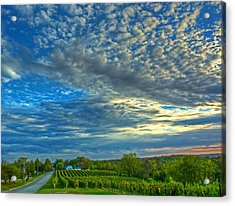 Acrylic Print featuring the photograph Vineyard Sunset II by William Fields