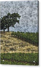 Vineyard Tree Acrylic Print