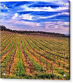 Vineyard Views High Above #napavalley Acrylic Print