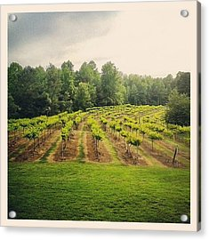 #vineyard #vines #rows #grapes #grow Acrylic Print