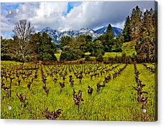 Vineyards And Mt St. Helena Acrylic Print