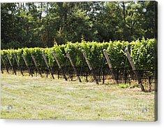 Vineyards Acrylic Print