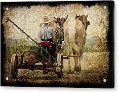 Vintage Amish Life D0064 Acrylic Print by Wes and Dotty Weber