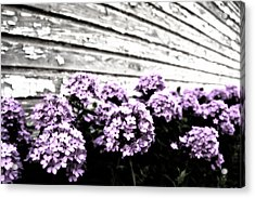 Vintage Flowers Acrylic Print by Tamyra Ayles
