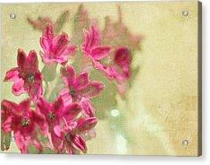 Vintage Hyacinth Acrylic Print