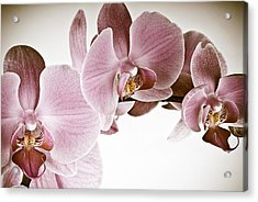Vintage Orchid Acrylic Print