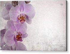 Vintage Orchids Acrylic Print