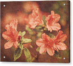 Acrylic Print featuring the photograph Vintage Pink Azaleas by Mary Hershberger
