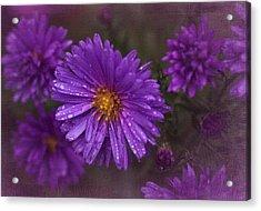 Vintage Purple  Acrylic Print by Richard Cummings