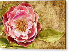 Acrylic Print featuring the photograph Vintage Rose by Cheryl Davis