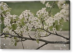 Vintage Spring Acrylic Print
