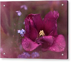 Vintage Tulip No. 2 Acrylic Print