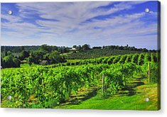 Acrylic Print featuring the photograph Vinyard View by Coby Cooper