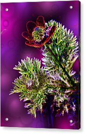 Violet Labialize Flora Acrylic Print by Bill Tiepelman