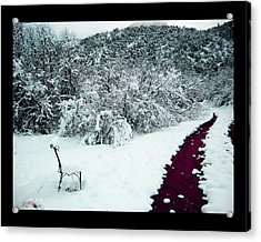 Acrylic Print featuring the photograph Violet Passage by Susanne Still