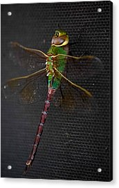Violet Tail Damsel Acrylic Print by DigiArt Diaries by Vicky B Fuller