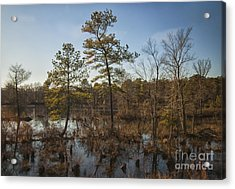 Acrylic Print featuring the photograph Virginia Swamp by Jim Moore