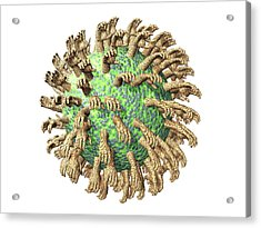 Virus With Hands Acrylic Print by Laguna Design