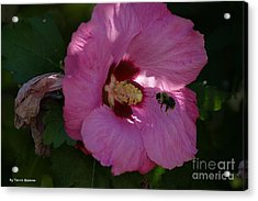 Acrylic Print featuring the photograph Visiting Bee by Tannis  Baldwin