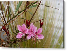 Visiting The Pink Guara Acrylic Print by Bonnie Muir