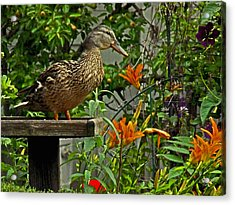 Acrylic Print featuring the photograph Visitor To The Feeder by William Fields