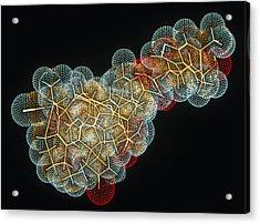 Vitamin B12 Molecule Acrylic Print by Pasieka