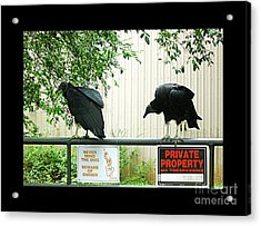 Acrylic Print featuring the photograph Vultures Guarding Property by Renee Trenholm