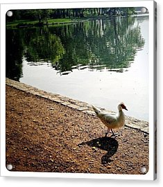 Waddle By The Water Acrylic Print