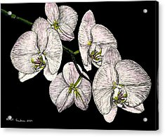 Wade's Orchids Acrylic Print by Robert Goudreau