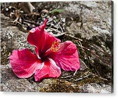 Waihe'e Hibiscus Acrylic Print