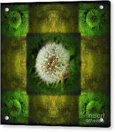 Waiting For A Wish Acrylic Print by Laura Iverson