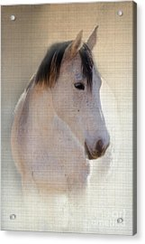 Waiting For Her Acrylic Print by Betty LaRue