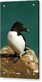 Waiting For Love II Acrylic Print by Jacqui Collett