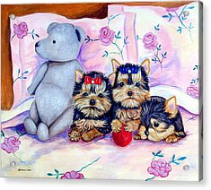 Waiting For Mom - Yorkshire Terrier Acrylic Print
