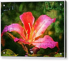 Waiting For My Orchid Tree To Bloom Acrylic Print