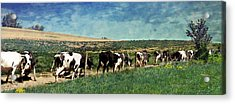 Waiting In Line Acrylic Print by Kathy Jennings