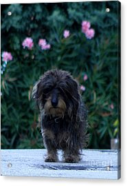 Acrylic Print featuring the photograph Waiting by Lainie Wrightson