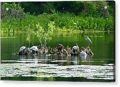 Wakulla Springs Wildlife Acrylic Print